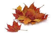 Herbst bei NATUREHOME