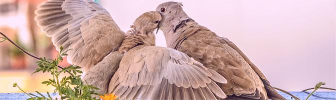 Vögel schnäbeln