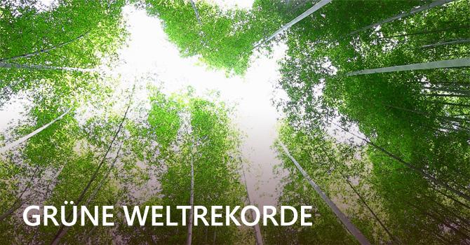 Grüne Weltrekorde: Rekordreife Umweltaktionen