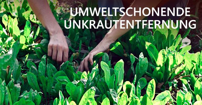 Umweltschonende Unkrautentfernung: Nachhaltige Tipps für die Anpflanzzeit